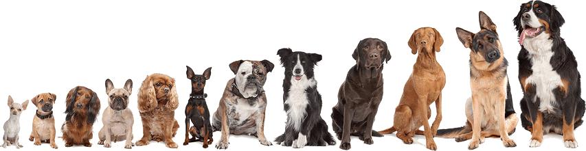 название и фото породы собак